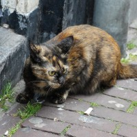 Feral Kitteh eating grass on the Haarlemmerstraat