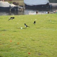 Magpie party! Park Schinkel Islands