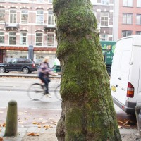 Groovy green trees that line Sarphatistraat