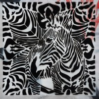 find the Zebra!