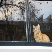 Window kitteh! Neighbour cat who was recently lost and now returned.