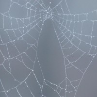 I never get tired of seeing spider webs covered in dew.