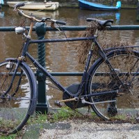 The vines have claimed this bike along the Nieuwe Achtergracht
