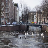 Waterfowl traffic jam on the Zwanengurgwal entrance to the Raamgracht