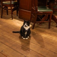 Very successful begging cat in a restaurant on the Warmoesstraat.